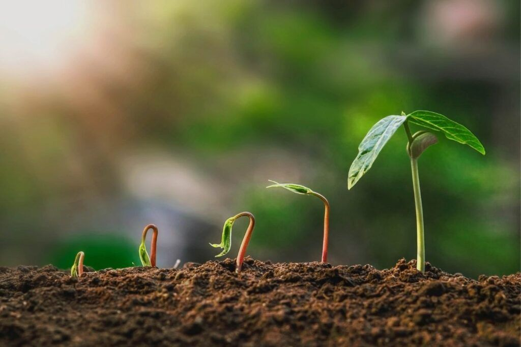 plantas composta